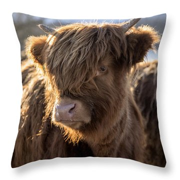 Highland Baby Coo Throw Pillow by Jeremy Lavender Photography