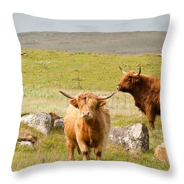 Highland Cattle Throw Pillow by Colette Panaioti