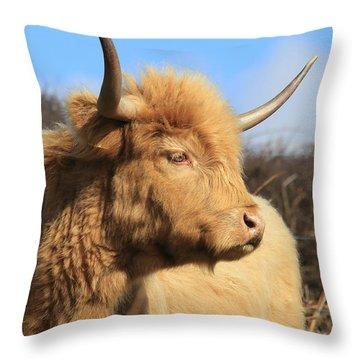 Highland Cattle Throw Pillow
