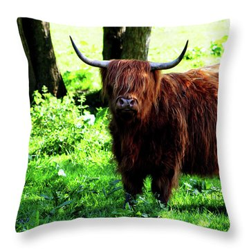 Highland Cow Throw Pillow by Dan Pearce