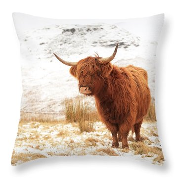 Highland Cow Throw Pillow by Grant Glendinning