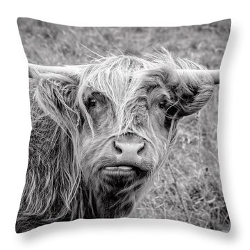 Highland Cow Throw Pillow by Jeremy Lavender Photography