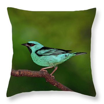 Highlight Throw Pillow by Tony Beck