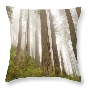 Hike Through The Redwoods Throw Pillow
