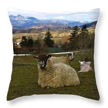Hill Sheep Throw Pillow by RKAB Works