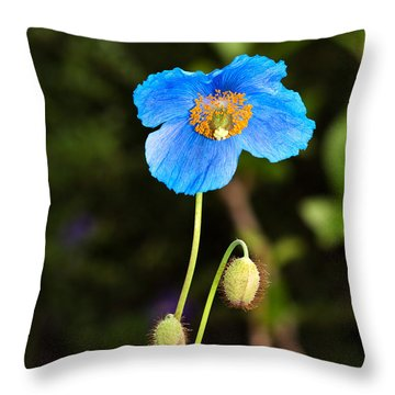 Himalayan Blue Poppy Throw Pillow by Louise Heusinkveld