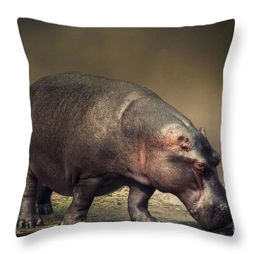 Throw Pillow featuring the photograph Hippo by Charuhas Images