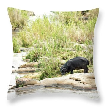 Hippo Drinking Out Of River Throw Pillow