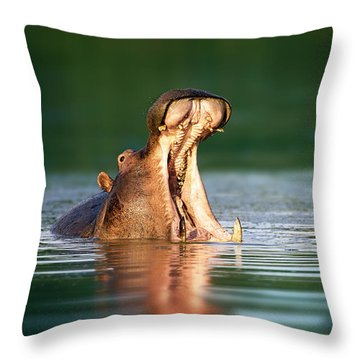 Hippopotamus Throw Pillow by Johan Swanepoel