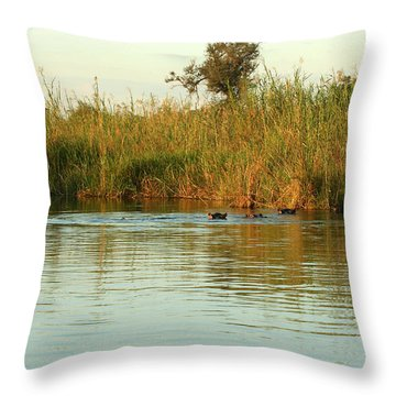 Throw Pillow featuring the photograph Hippos, South Africa by Karen Zuk Rosenblatt