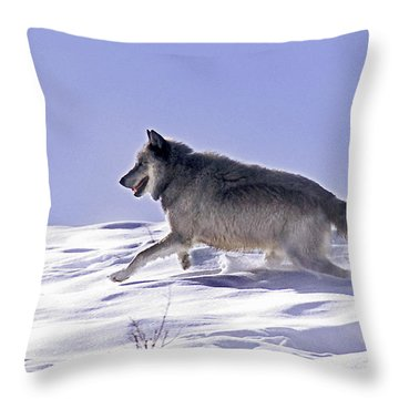 His Majesty Wolf 21m Throw Pillow