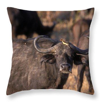 Hitching A Ride 1 Throw Pillow by Sandra Bronstein