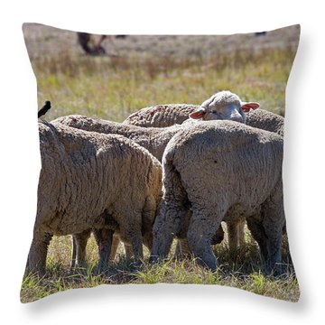 Hitching A Ride Throw Pillow by Mike  Dawson
