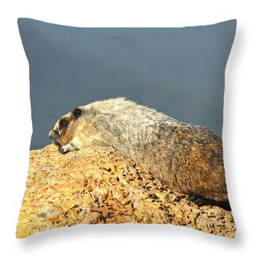 Hoary Marmot Nap Throw Pillow