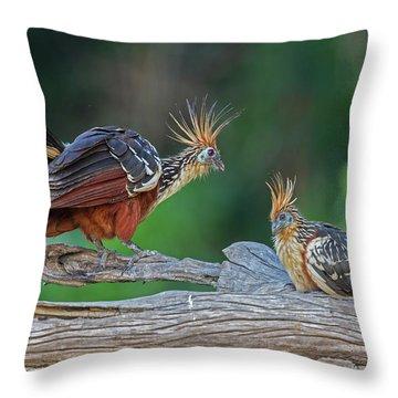 Hoatzins Throw Pillow