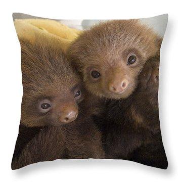 Hoffmanns Two-toed Sloth Choloepus Throw Pillow by Suzi Eszterhas