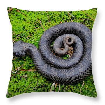 Hognose Spiral Throw Pillow