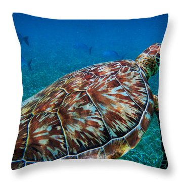 Throw Pillow featuring the photograph Hol Chan Sea Turtle 001 by Lance Vaughn