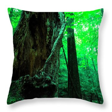 Hollow Maple Tree Throw Pillow by Thomas R Fletcher