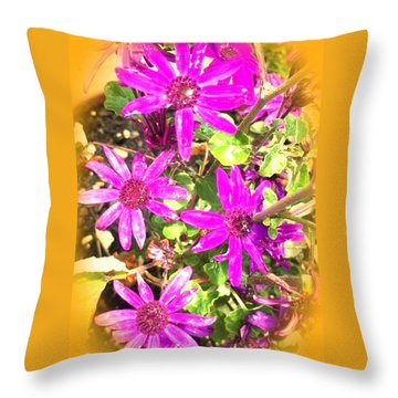 Hollywood Flower Stars Throw Pillow