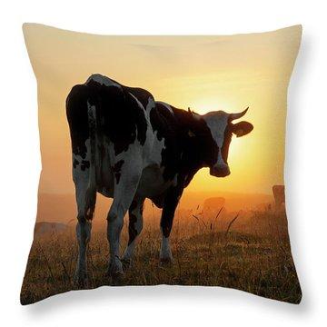 Holstein Friesian Cow Throw Pillow