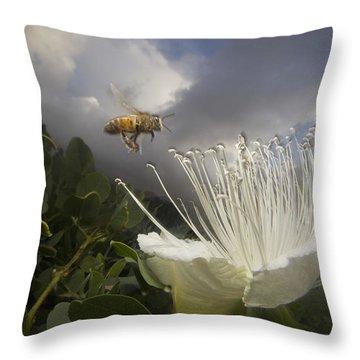 Honey Bee Apis Mellifera Approaching Throw Pillow by Mark Moffett
