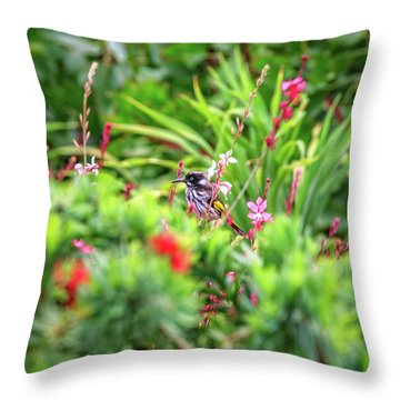 Honey Eater, Bushy Lakes Throw Pillow by Dave Catley