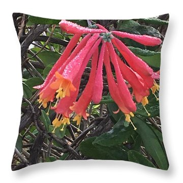 Throw Pillow featuring the photograph Honeysuckle by Kay Gilley