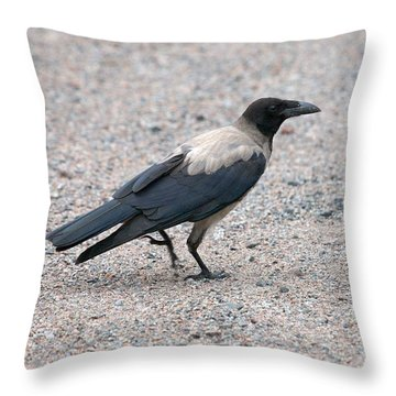 Throw Pillow featuring the photograph Hooded Crow by Jouko Lehto