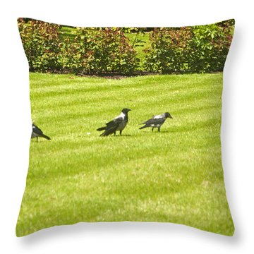 Hooded Crows Ireland Throw Pillow