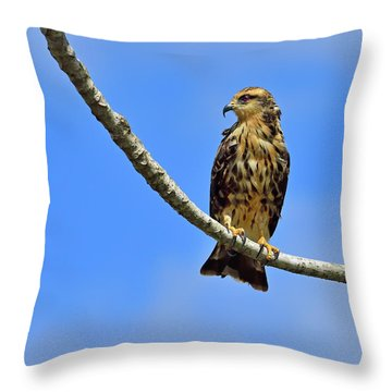 Hook Throw Pillow by Tony Beck