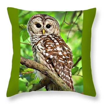 Throw Pillow featuring the photograph Hoot Owl by Christina Rollo