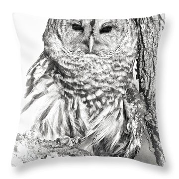 Hoot Owl Throw Pillow by Wade Aiken