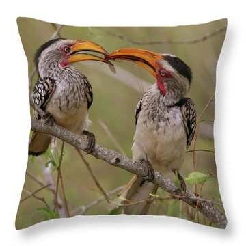 Hornbill Love Throw Pillow