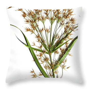 Horned Beak-rush Throw Pillow