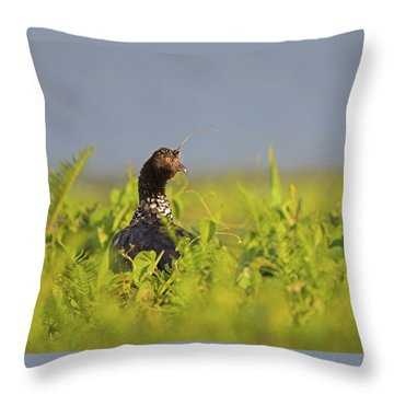 Horned Screamer Throw Pillow