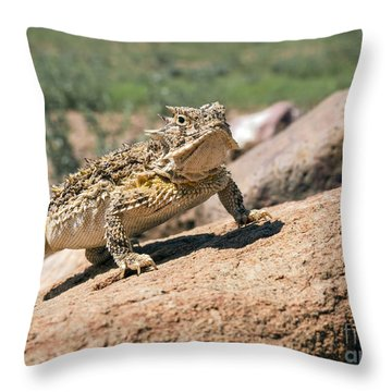 Horny Toad Throw Pillow