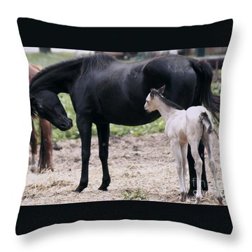Horse And Colt Throw Pillow by Debra Crank