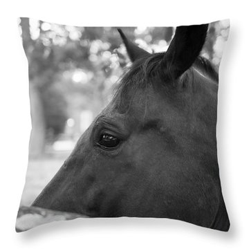 Horse At Fence Throw Pillow