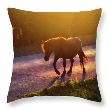 Horse Crossing The Road At Sunset Throw Pillow