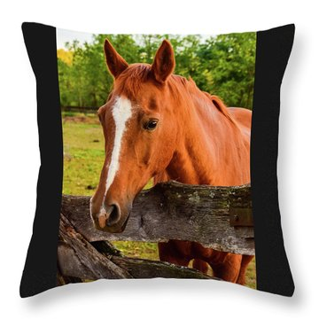 Horse Friends Throw Pillow