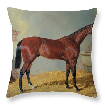 Horse In A Stable Throw Pillow