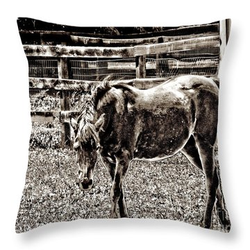Throw Pillow featuring the photograph Horse In Black And White by Annie Zeno