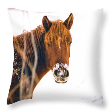 Horse In Winter Throw Pillow by Steve Karol