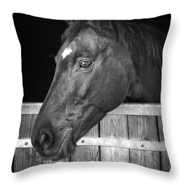 Throw Pillow featuring the photograph Horse Portrait by Delphimages Photo Creations