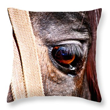 Horse Tears Throw Pillow