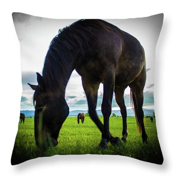 Throw Pillow featuring the photograph Horse Time by Tyson Kinnison