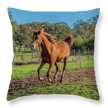 Horse Trot  Throw Pillow