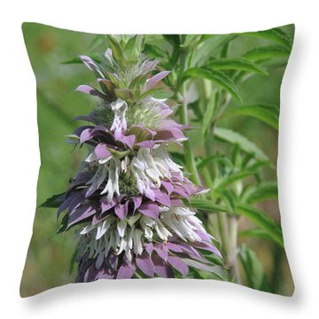 Horsemint Throw Pillow by Robyn Stacey