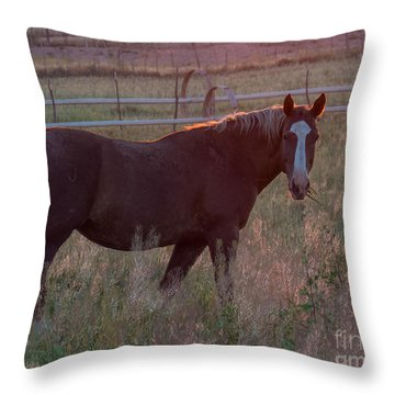 Horses 2 Throw Pillow